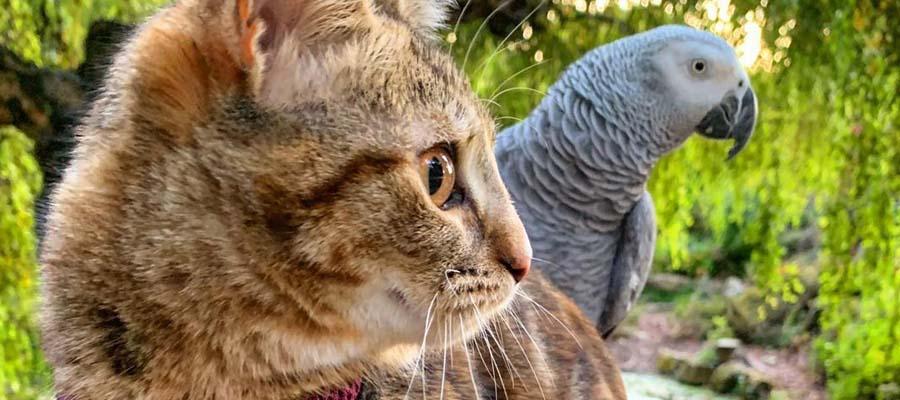 Papağan arkadaşıyla seyahat eden kedi Quita
